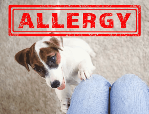 allergy in dogs