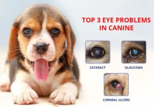 Top Eye Problems In Canine