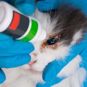 eye hygiene in cats